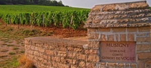 The Musigny Vineyard, the epitome of Burgundy's refined femininity