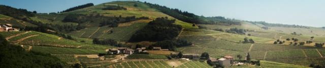 beaujolais-paysage